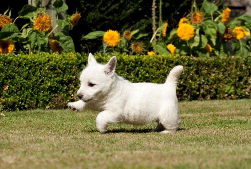 /puppies
